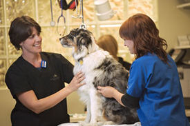 Specialties veterinary specialty hospital