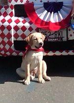 Tava 4th puppy
