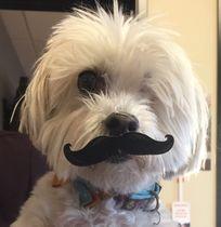 2015 zoe with mustache